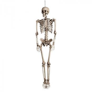 Διακοσμητικά Κρανία - Σκελετοί