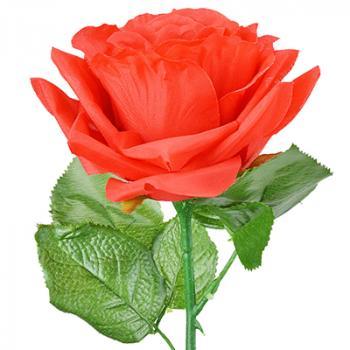 Τριαντάφυλλα - Ροδοπέταλλα