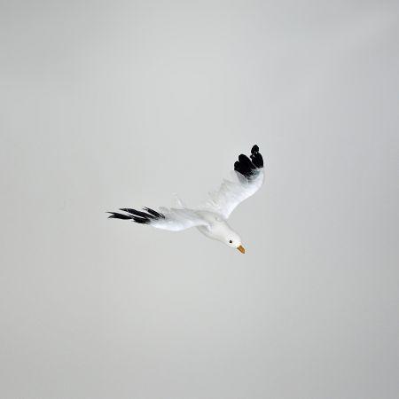Διακοσμητικός γλάρος με ανοιγμένα φτερά 25cm