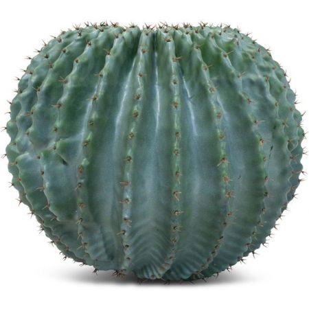 Τεχνητός Κάκτος-Μπάλα (Cactus Ball) 40cm
