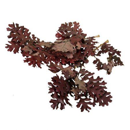 Σετ 400gr Φθινοπωρινά  φύλλα Βελανιδιάς φυσικά Μπορντό