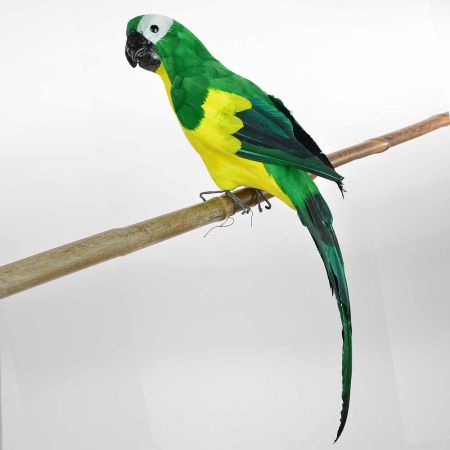 Διακοσμητικός Παπαγάλος Πράσινος 60cm