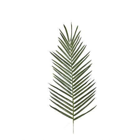 Διακοσμητικό φύλλο φοίνικα , 95cm