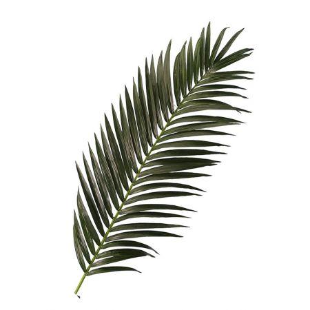 Διακοσμητικό φύλλο φοίνικα , 180cm