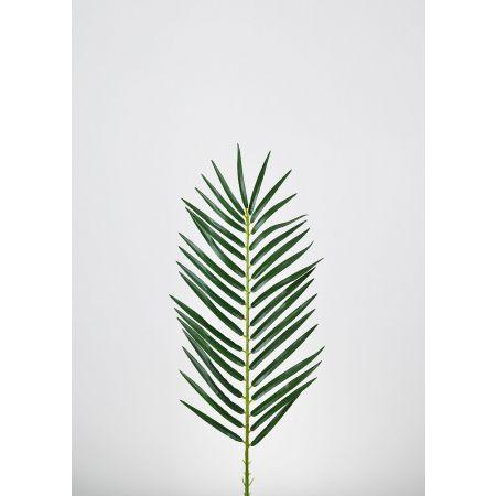 Διακοσμητικό φοινικόφυλλο Πράσινο 80x20cm