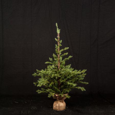 Χριστουγεννιάτικο δέντρο σαν αληθινό PE PLASTIC με βάση τσουβάλι 180cm