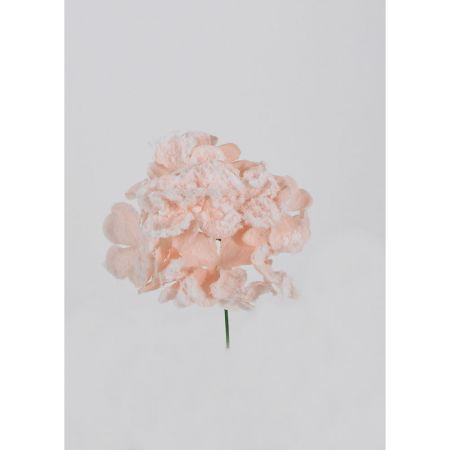Χριστουγεννιάτικο λουλούδι Ορτανσία Ροζ Χιονισμένο 19cm