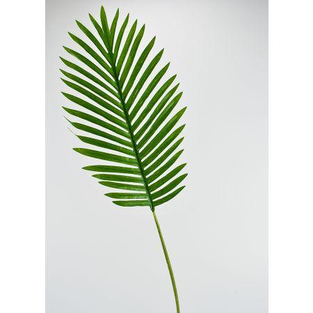 Διακοσμητικό φύλλο Φοίνικα Πράσινο 22x80cm