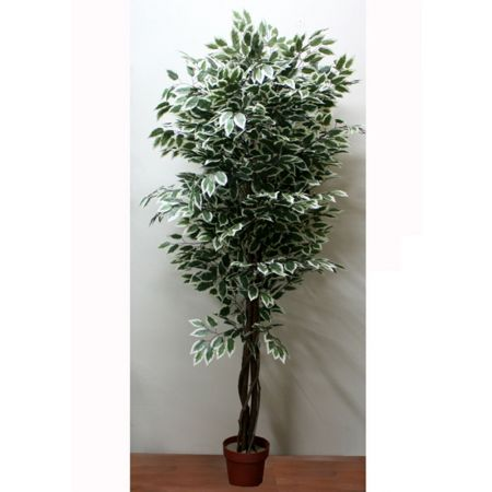 Τεχνητό δέντρο φίκος - Benjamini δίχρωμο σε γλάστρα 210cm