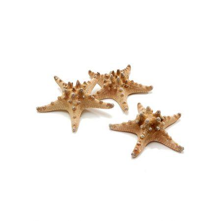 Σετ 12τχ Φυσικοί αστερίες 10-15cm