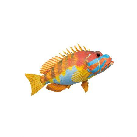 Διακοσμητικό εξωτικό ψάρι Πορτοκαλί - Γαλάζιο 47x29x13cm