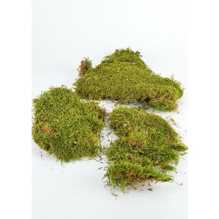 Συσκευασία 150gr Διακοσμητικά φυσικά βρύα - moss Πράσινα