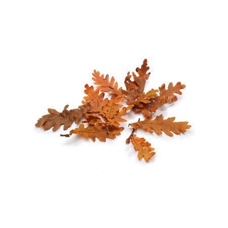 Σετ 150gr Διακοσμητικά φθινοπωρινά φύλλα Βελανιδιάς Πορτοκαλί 5-10cm