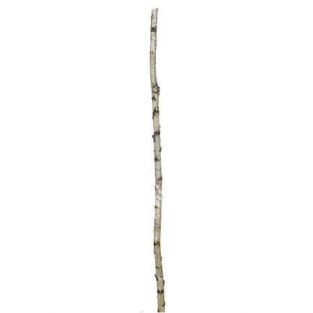 Φυσικός κορμός από δέντρο Σημύδα 3-5x200cm
