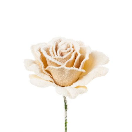 Τριαντάφυλλο χιονισμένο Μπεζ 21cm