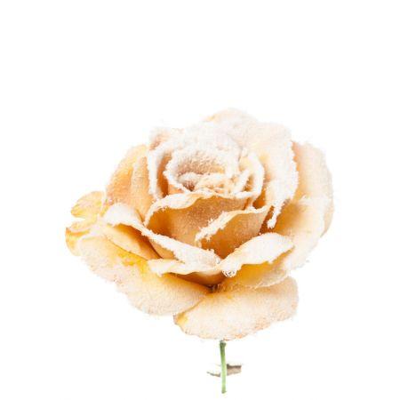 Χριστουγεννιάτικο τριαντάφυλλο χιονισμένο Μπεζ 23cm