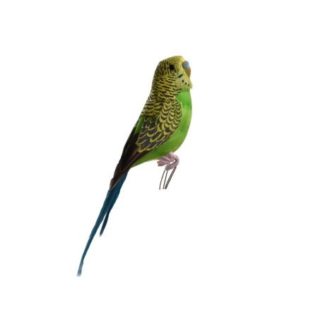 Διακοσμητικό παπαγαλάκι Parakeet Πράσινο 20cm