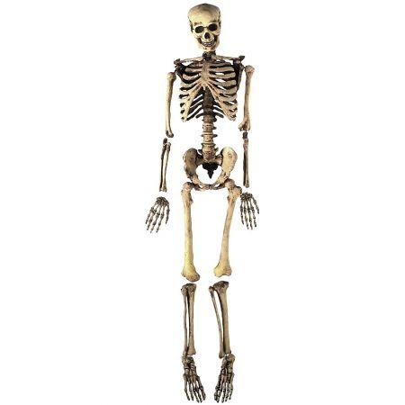 Διακοσμητικός σκελετός 160cm