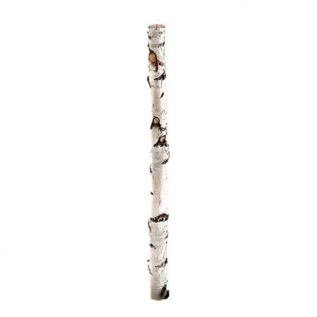 Κορμός δέντρου σημύδας 180cm