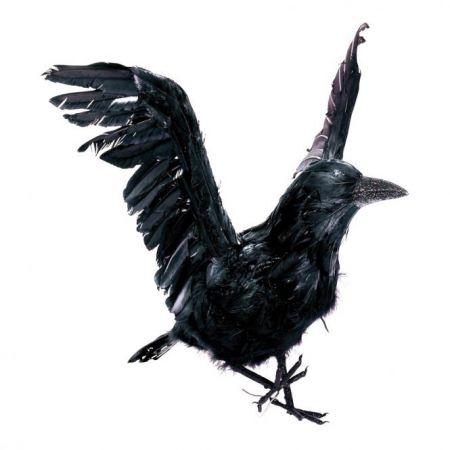 Διακοσμητικό κοράκι με ανοιχτά φτερά 50x45cm