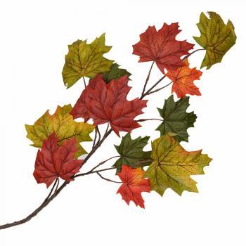 Φθινοπωρινά κλαδιά
