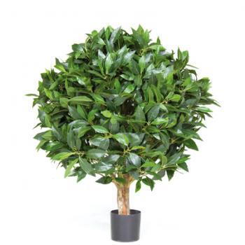 Φυτά υψηλής ποιότητας HQ
